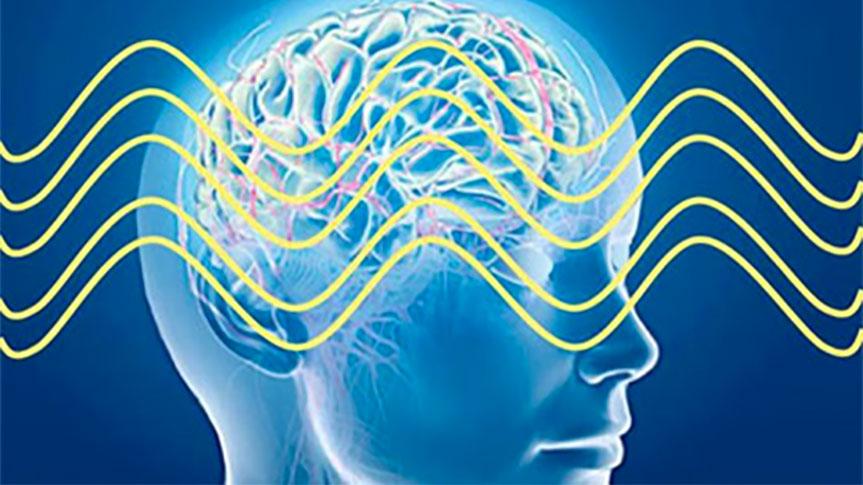 Schéma en coupe d'un cerveau avec ondes cérébrales